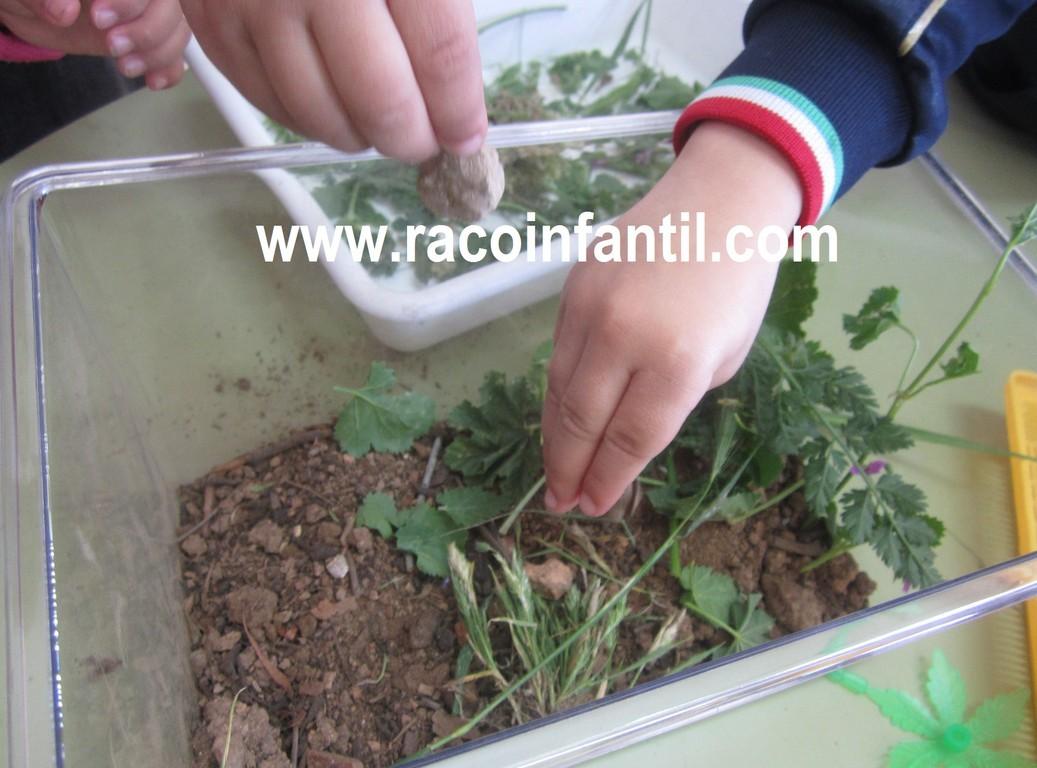Observando los caracoles for Caracoles de jardin que comen